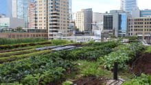 Using Green Roofs to Grow Food