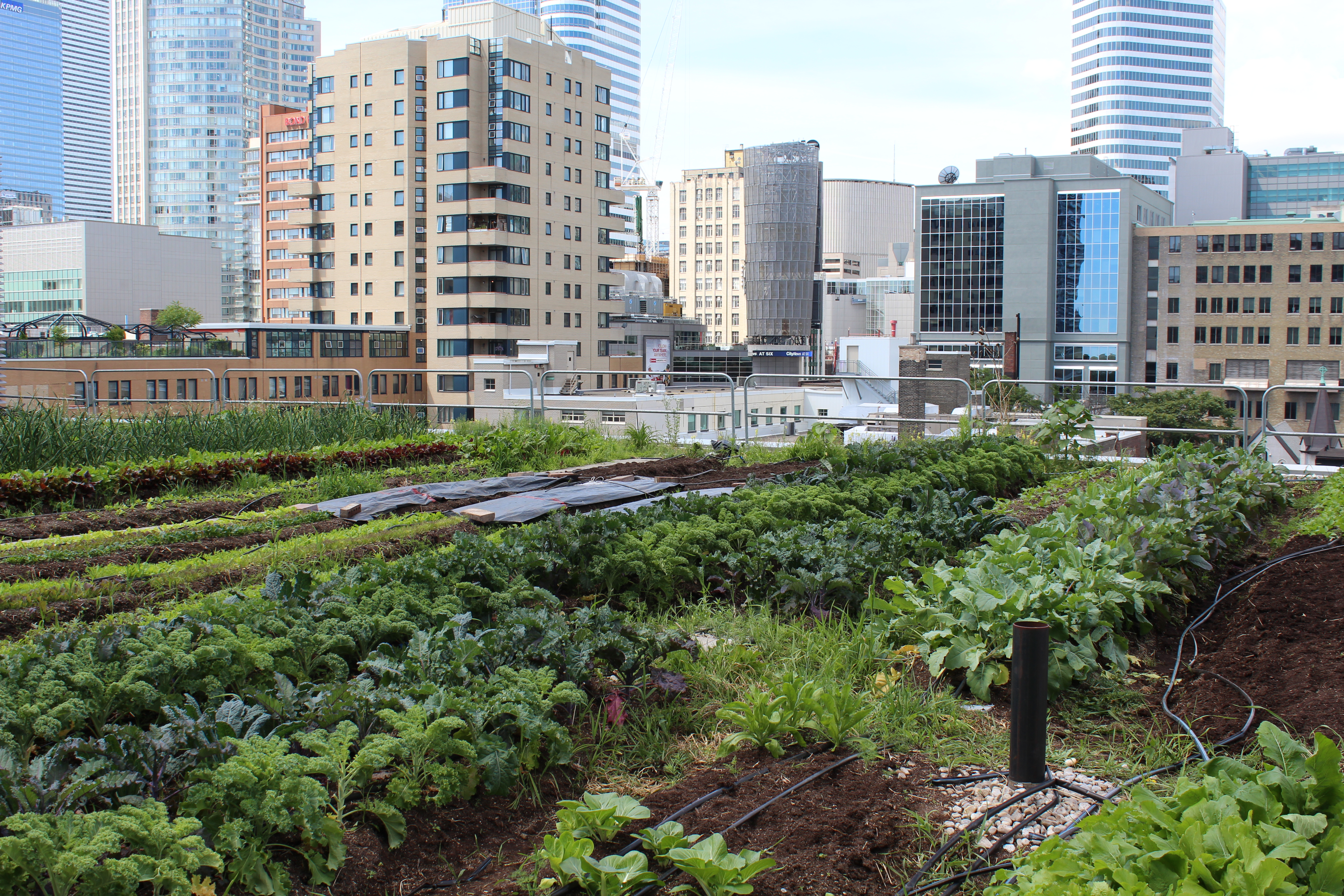 Using Green Roofs To Grow Food Coolearth Architecture Inc